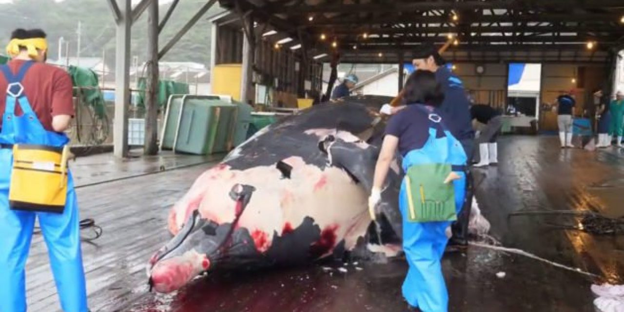This Amazing Seafood Processing Line Video Will Blow You Away