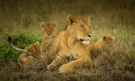 Big Cat Photos From The Wildlife Photo Contest
