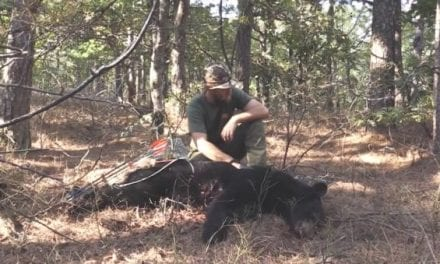 Hunter Shoots Black Bear On Foot With a Traditional Bow on Public Land
