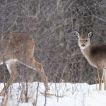 Is It Okay to Shoot a Doe with Fawns?