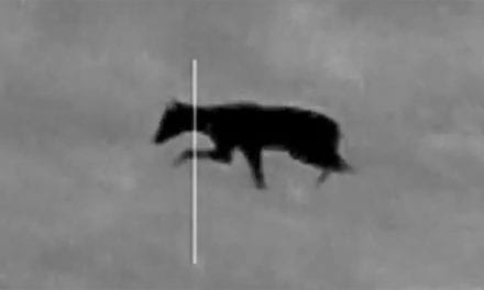 Night Hunter Shoots a Strange Animal and Some People Think It's a Chupacabra