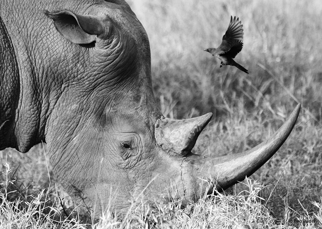 """Today's Photo Of The Day is """"Landing Site"""" by Bob Bader. Location: Kruger National Park, South Africa."""