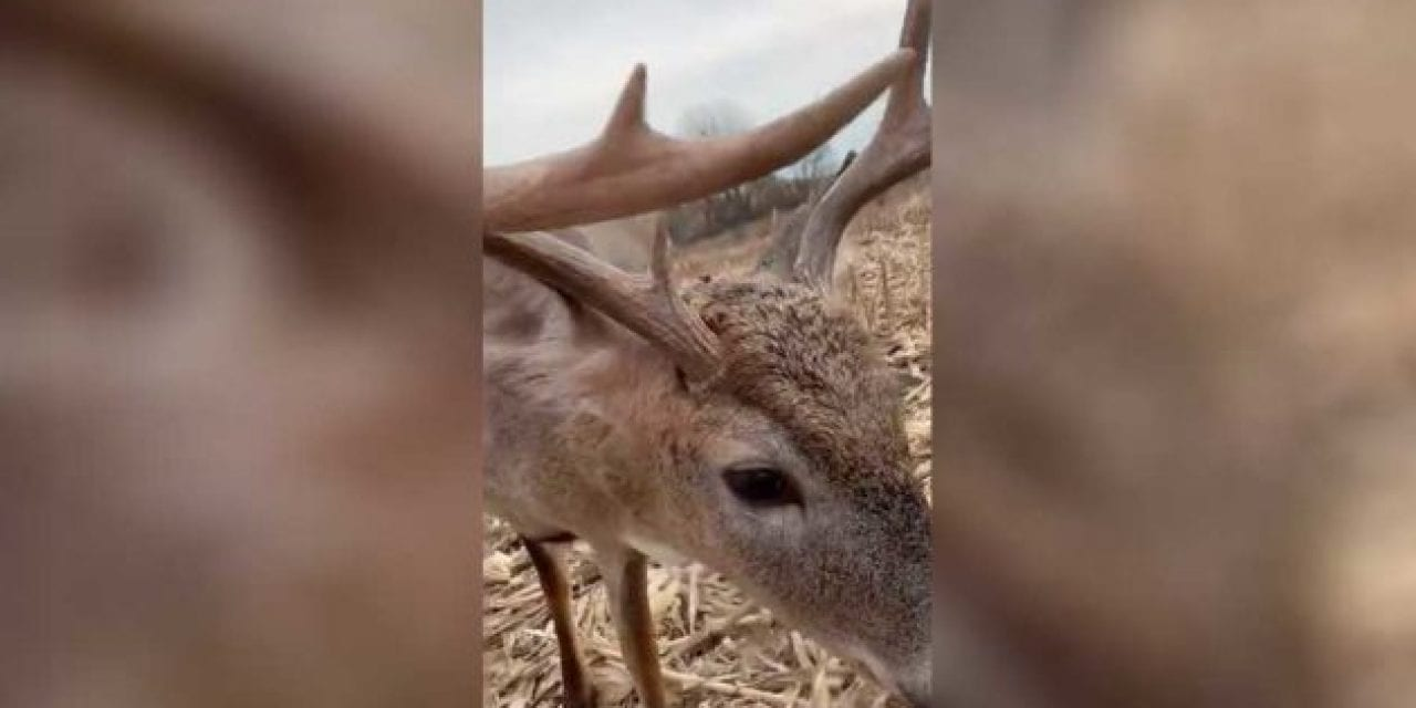 8-Point Buck Walks Right Up to the Muzzle of Hunter's Rifle