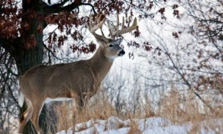 A Deer Hunter's Christmas: Take a Moment to Listen and Reflect