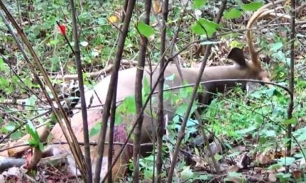Bowhunter Gets Lucky with a Bad Shot