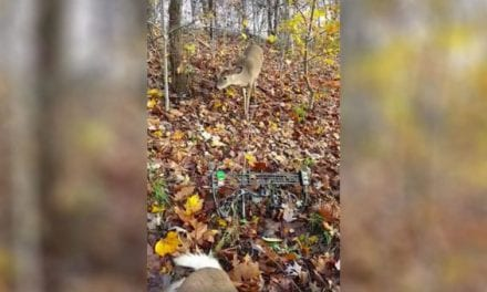 Curious Buck Checks Out Bowhunter and His Fallen Big Brother
