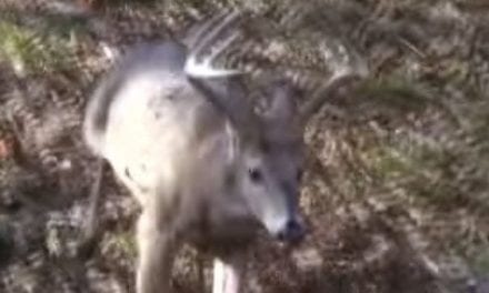 Deer Lands Feet From Hunter, Making for an Easy Buck Recovery