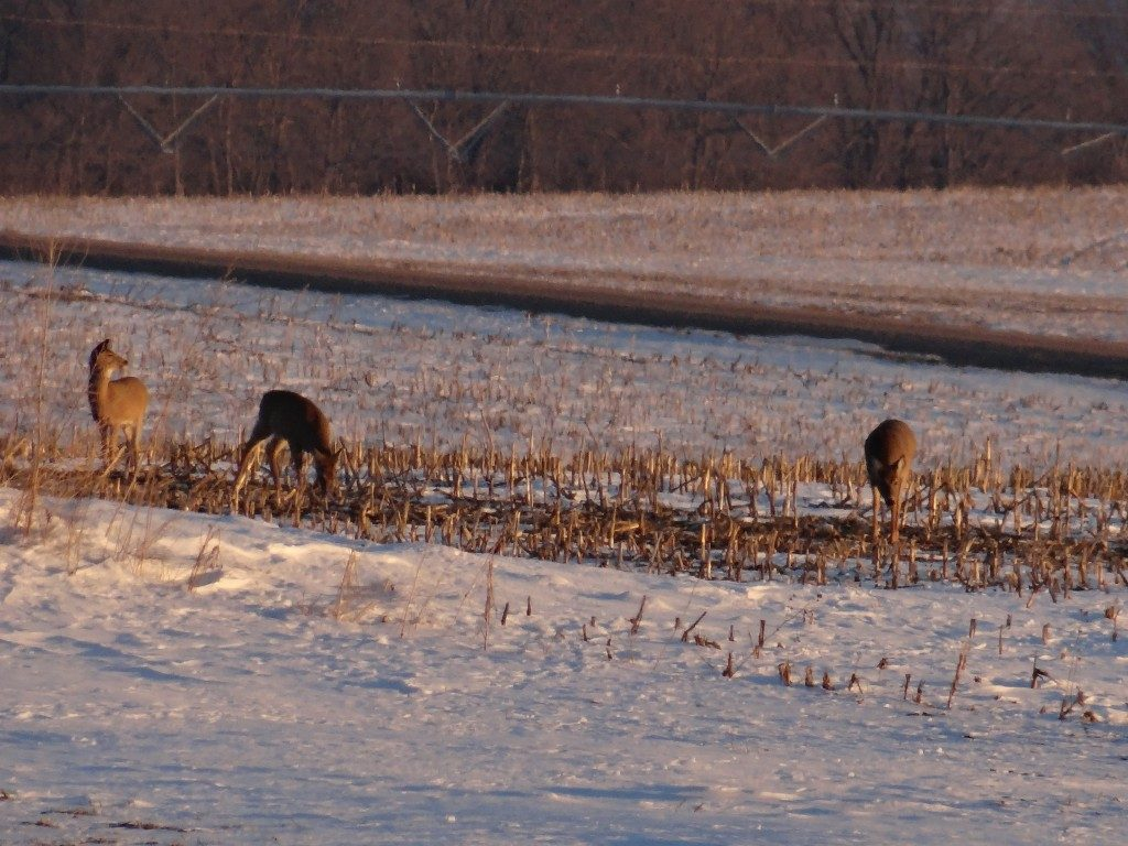 Late-Season Deer Hunting Tips