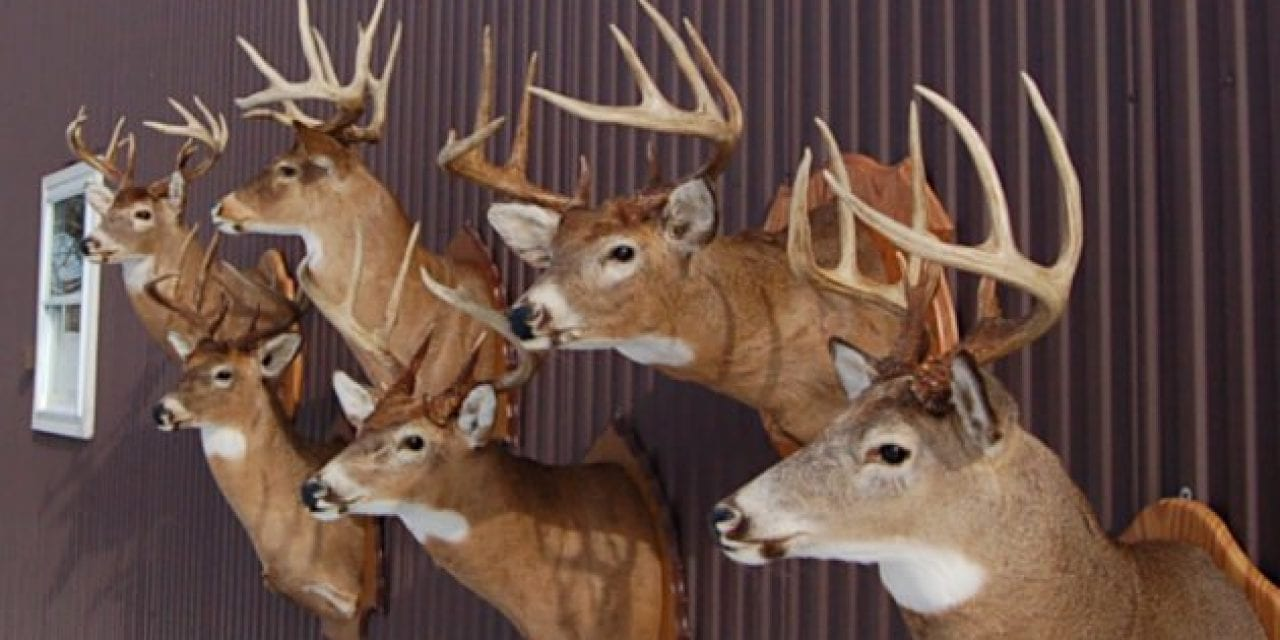 Deer Taxidermy Options: 6 Different Ways to Memorialize Your Harvest