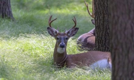 Researchers Found CWD in Deer Semen for the First Time