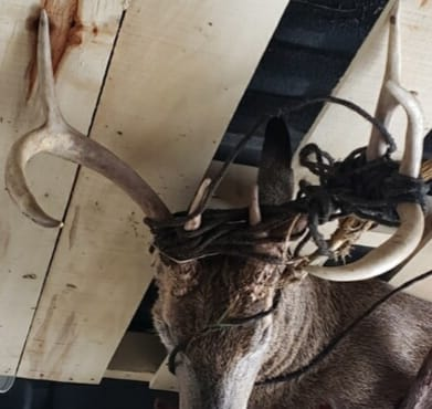 The Rope Buck
