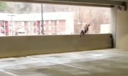 8-Point Jumps From Second Floor of Parking Garage