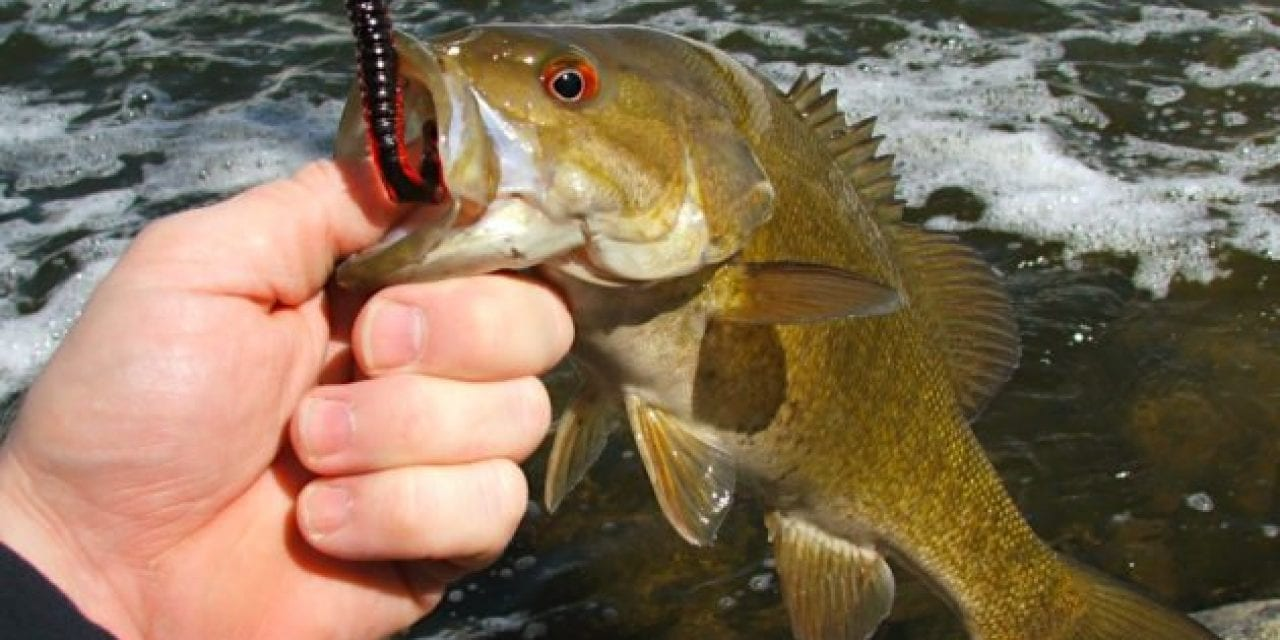 Everything You Need to Know About Fishing for Bass in the WInter