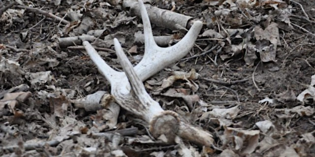 Here are the 8 Distinct Types of Shed Hunting Personalities