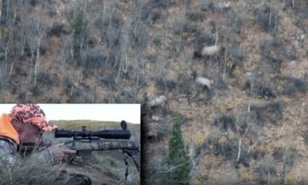 Hunter Shoots Elk From 875 Yards With .308