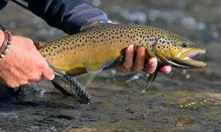 The Universal Guide to All the Trout Species in the United States