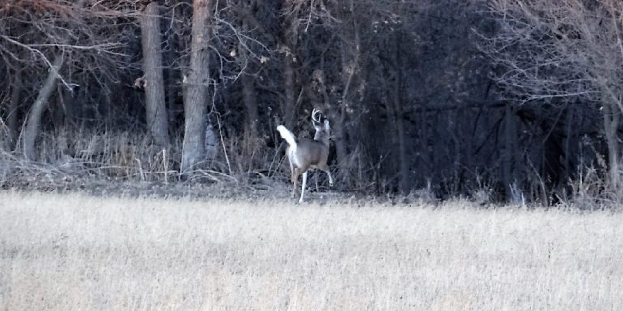 Think Like a Buck to Find Shed Deer Antlers