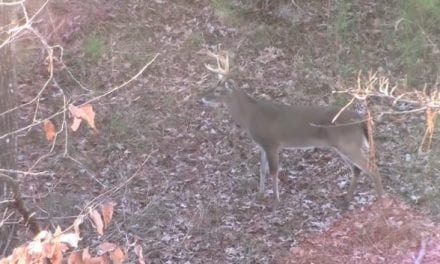 Watch This Guy Bag a Big Buck With a Glock 10mm