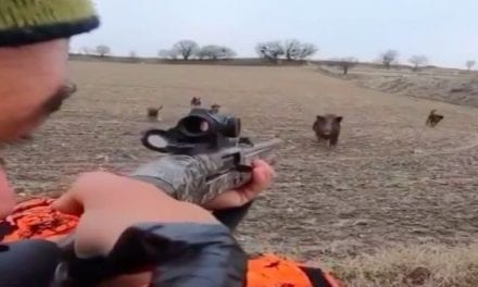 Wild Boar Hunting: Make the Shot or Pay the Price