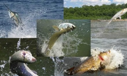 30 Photos of Fish Jumping Out of Water You Want to Fish In