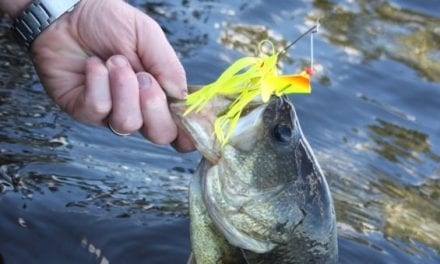 5 Bass Fishing Lures You Should Always Keep on Deck
