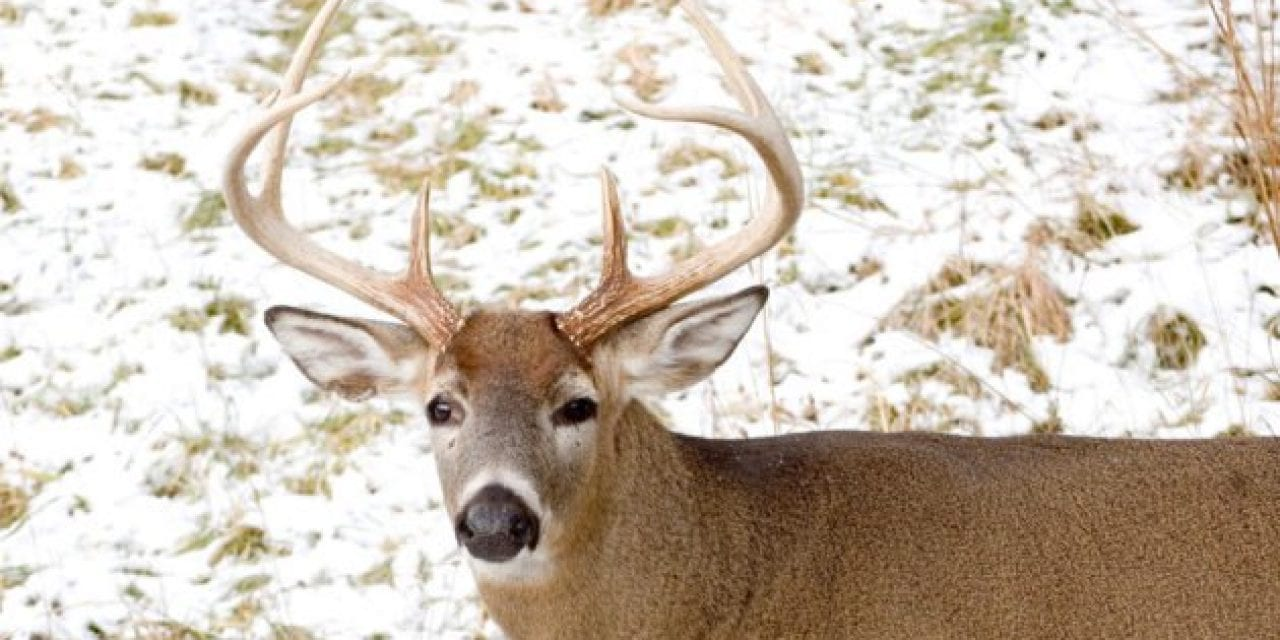 5 Best Places to Hunt in Ohio