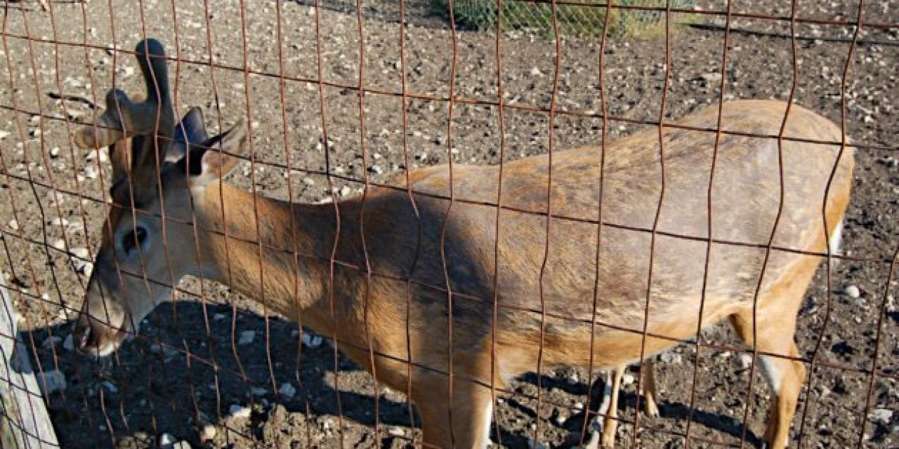 $500,000 in Taxpayer Money Has Been Paid to Deer Farms for CWD Buyouts