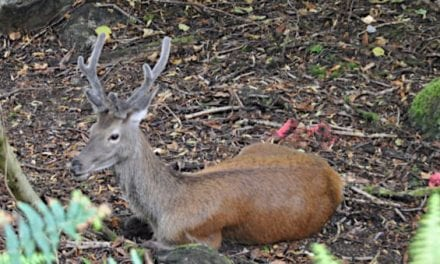 Brutal Deer Attack in France Ended with Hunter Getting 50 Facial Stitches