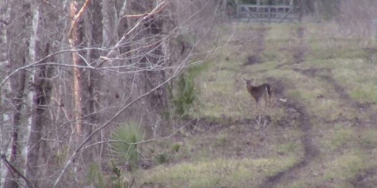 Deer Hunting With an AR-15 in 6.8 SPC