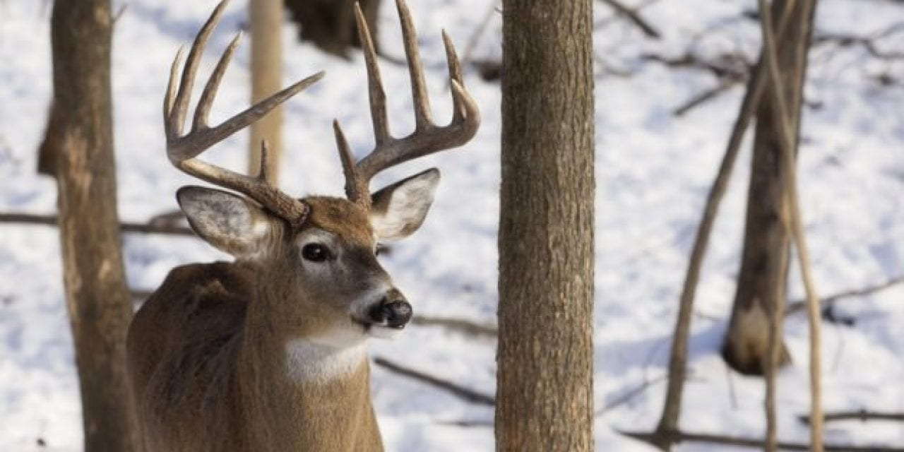 How to Determine If You Have Too Many (or Not Enough) Deer on Your Property