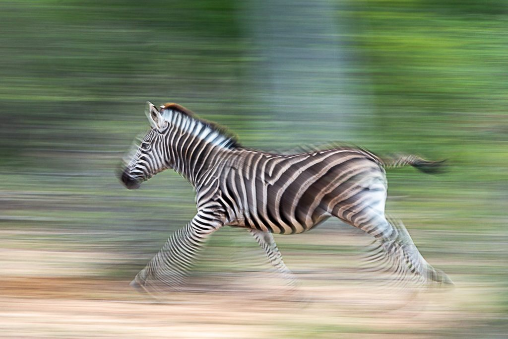 Motion Blur Assignment Winner Terrence Trevias