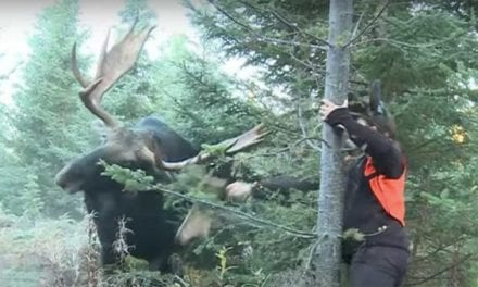 Hunter Takes an Odd Approach to Summon Bull Moose