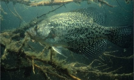 It is Spring and Crappies Are on the Mind