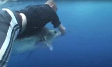 Man Dives From Chopper onto a Marlin, But the Camera Sequence Doesn't Add Up