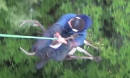 Recovering a Red Stag in New Zealand With the Help of a Helicopter