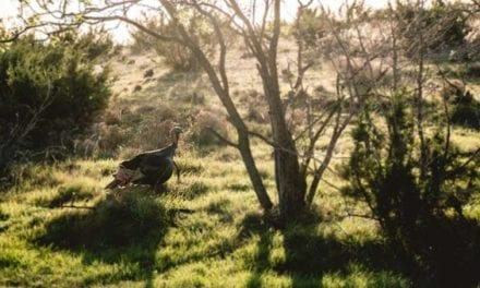 The 2020 Turkey Hunting Gear Guide