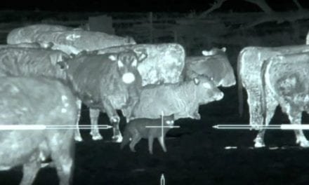 45 Coyotes Downed Using Thermal Imaging
