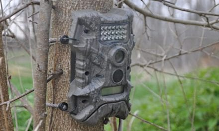 8 Trail Cameras to Consider Before Next Hunting Season