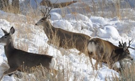 Colorado Approves 210,000 New Acres for Hunting Through Public Access Program