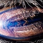 The Eyes Have it: Armenian Photo Artist Suren Manvelyan Shares His Incredible Pictures of Animal Eyes