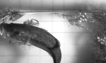 The Science of Setting the Hook on a Topwater Bait
