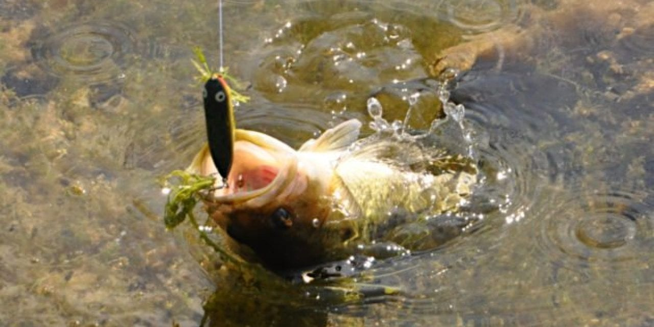Artificial vs. Live Bait: What Works for You? We'll Explain