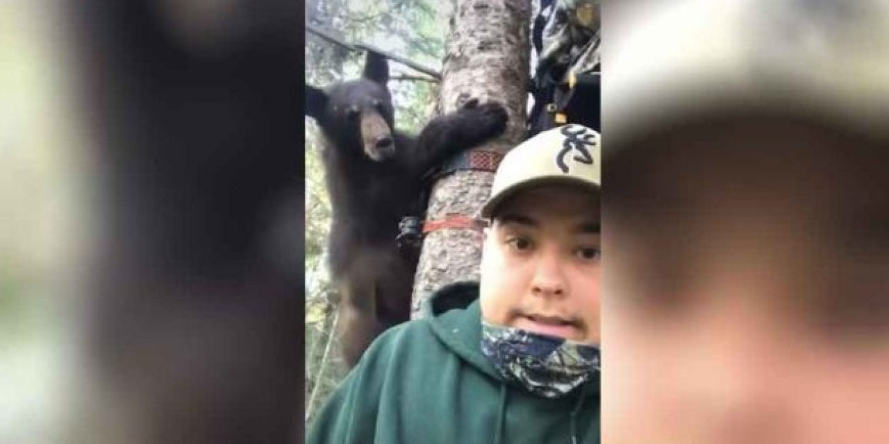 Bold Bear Cub Nearly Joins Hunters in Their Treestand