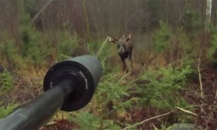 Moose Gets Up Close and Personal in This First-Person Footage