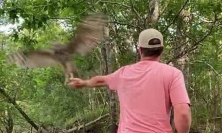 Owl Grabs Bluegill Right Out of Fisherman's Hand