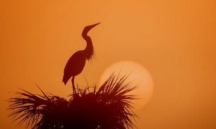Photographing Silhouettes, Part 3