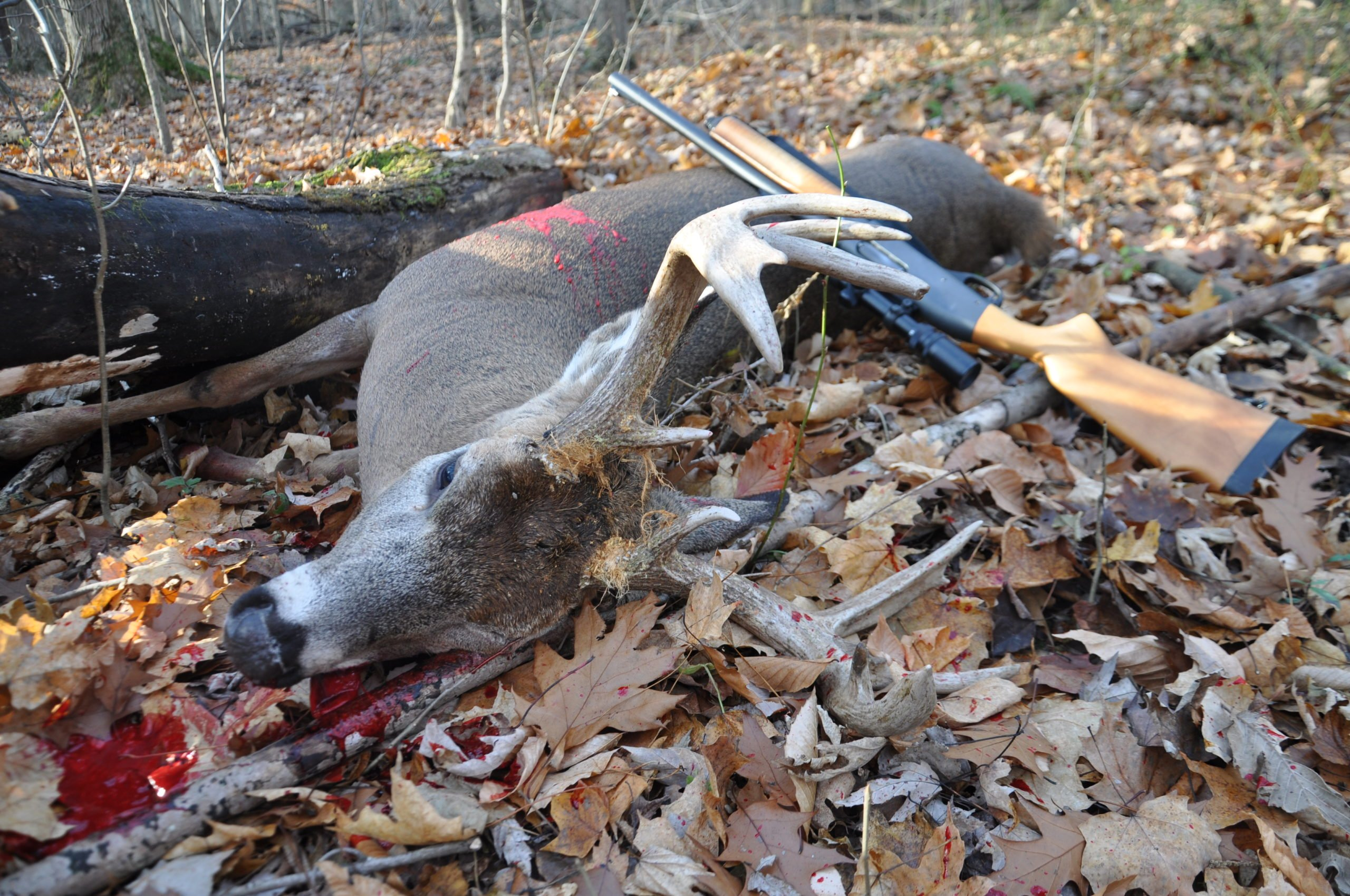 Shotgun vs Rifle for Deer