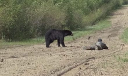 This Black Bear Hunt Presents Wildly Close Encounter