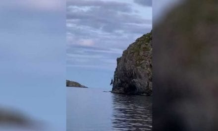 Canadian Bull Moose Cliff Dives Right in Front of Onlookers