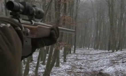 Expert German Marksman Takes Out Entire Sounder of Hogs